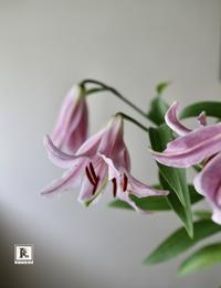 「お家にお花をかざる」7月 - Bouquets_ryoko