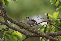 幼鳥たち~今週のウトナイ湖 - やぁやぁ。