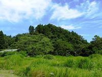 夏の音 - 千葉県いすみ環境と文化のさとセンター