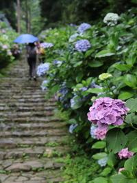 栃木市太平山 紫陽花の撮影会~雨の日は撮影日和~ - 日々の贈り物(私の宇都宮生活)