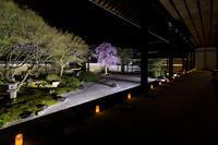 2020桜咲く京都 妙顕寺ライトアップ - 花景色-K.W.C. PhotoBlog