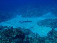 2014.08 奄美 The 3rd day The 2nd Dive - ランゲルハンス島の海