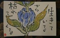 りんどう「生きているから枯れてくる」 - ムッチャンの絵手紙日記