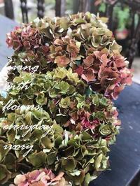 ホットレッド -  Flower and cafe 花空間 ivory (アイボリー)