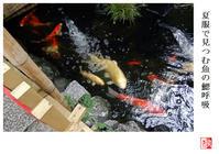 夏服で見つむ魚の鰓呼吸 - 風と光の散歩道、有希編2a