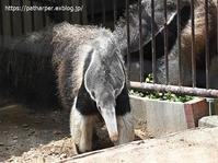 2020年6月王子動物園3その5 みゆきオヤツタイム - ハープの徒然草