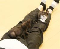 子猫の遊び場 - ちいさなチカラ