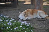 暑くて日陰で休む。 - FUTU no PHOTO