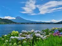 2020.7.2梅雨の晴れ間の富士山と湖畔の花々(河口湖畔) - ダイヤモンド△△追っかけ記録