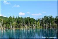 白金青い池 - 北海道photo一撮り旅