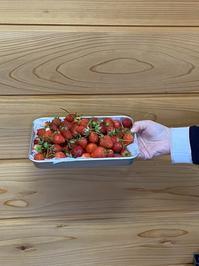 三浦農園 イチゴ 🍓 - 【日直田酒】 - 西田酒造店blog -