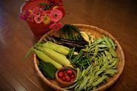 北摂の家庭菜園「7月の野菜の収穫」 - 今夜の夕食