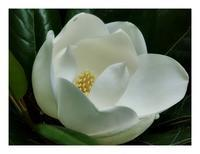 白い花2つ - あおいそら