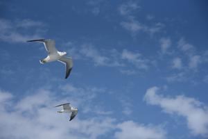 空から - 雲母(KIRA)の舟に乗って