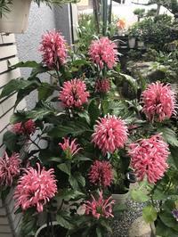 花、家庭菜園 - ももちゃん大好き♪