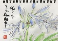 "p1292 "" 紫君子蘭 "" 松の川緑道2020年7月4日 - 侘び寂び"