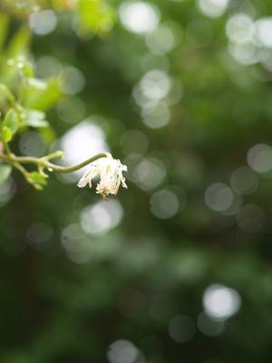 孫雲雀さえずる - hibariの巣