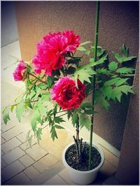 玄関に花を飾る - 昭和の家+庭とお片付け