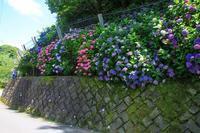 鎌倉二階堂の紫陽花 - 暮らしを紡ぐ2