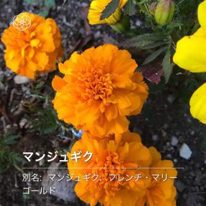 ハナノナ - 山田南平Blog