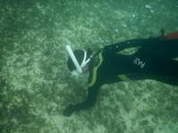 海をきれいに☆ - 沖縄ダイビング&フィッシング DSA ブログ
