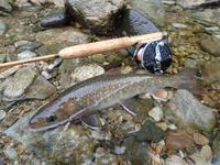 202006中旬 雨の恵みを期待して - 森と山と渓魚(フライフィッシングで渓流を満喫してます!)