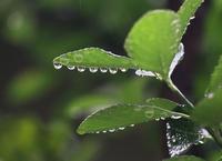 梅雨 - 写真を主とした日記です