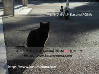 ろーま「路地裏ねこ探し♪① 」2020~ 今日の(=^ェ^=) ~ - 「ROMA」在旅写ライターKasumiの 最新!ローマ ふぉとぶろぐ♪