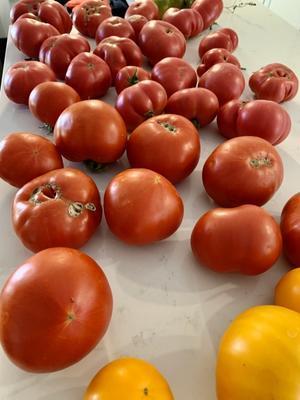 トマト仕事 - ローズ家の台所