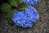 Blue Heart - MPG