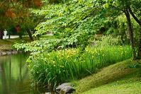 初夏の中島公園 - お茶にしませんか2