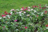 池のある公園で、ダイサギや花など - ぶらり散歩 ~四季折々フォト日記~
