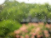 雨とあじさい。 - ひねもすのたり2