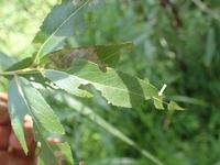幼虫探しの日 - 蝶と蜻蛉の撮影日記