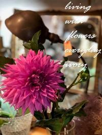 """自家製""""ダリア"""" -  Flower and cafe 花空間 ivory (アイボリー)"""