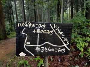 2020年7月4日 頼成の森(富山県砺波市) - Ascender & Descender