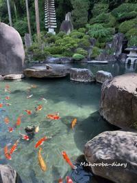 鯉と鴨 - まほろば日記