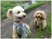 今日は私のウォーキングに付き合ってくれたさくら、1日二回のお散歩、ありがとうね!! - さくらおばちゃんの趣味悠遊