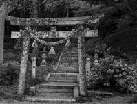 鳥居Torii - え~えふ写真館