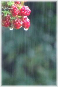 激しい雨音・・・ - おだやかに たのしく Que Sera Sera