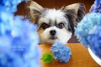庭のブーケ*(in the blue・続6月18日) - FUNKY'S BLUE SKY