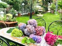 紫陽花の剪定♫とトラサイドAの散布(^∇^) - 薪割りマコのバラの庭