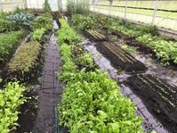 また大雨❗️ - 富士のふもとの農業日誌