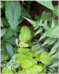 雨は緑を潤し..... - 小さな庭 2