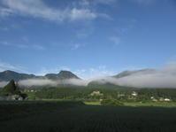 朝の雲・ネジバナ・カオス - 南阿蘇 手づくり農園 菜の風