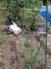 梅雨時期の家庭菜園 - 瀬戸内で遊ぶ