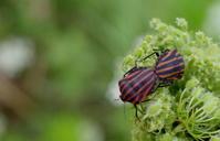 小暑温風至(あつかぜいたる) - 紀州里山の蝶たち