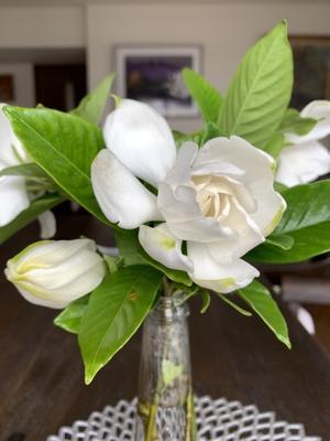 クチナシの花とクロセチン - Ray Matsumoto Give Love & Peace