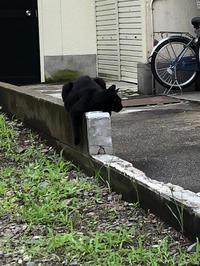 思わず、激写! - Mamamayumi26's Blog