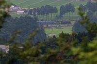 木の枝の隙間から覗く杉並木- 2020年梅雨・東武鬼怒川線 - - ねこの撮った汽車